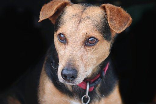 Dog, Friend, Hybrid, Mixed Breed Dog, Pet, Best Friends