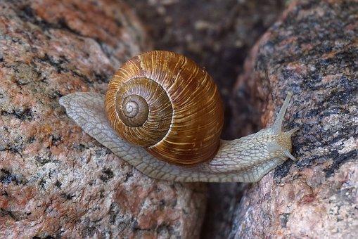 Snail, Winniczek, Cover, The Creation Of, Molluscum