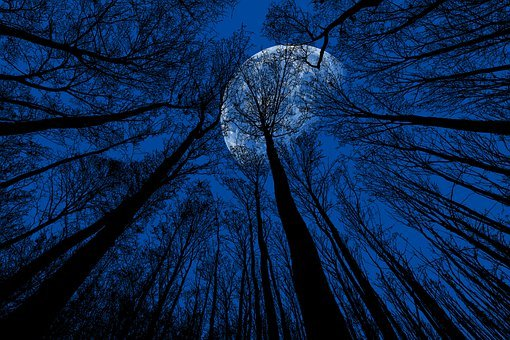 Night, Moon, Night Sky, Moonlight, Blue, Trees, Dusk