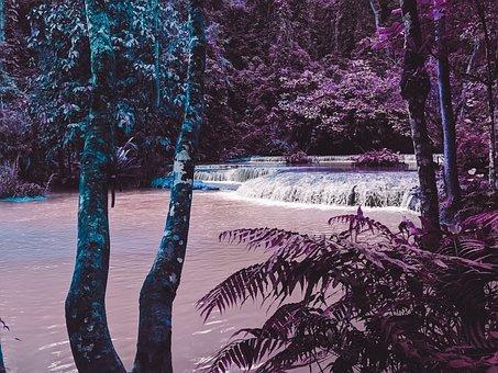 Water, Tree, Beach, Trees, Sky, Jungle, Sunrise