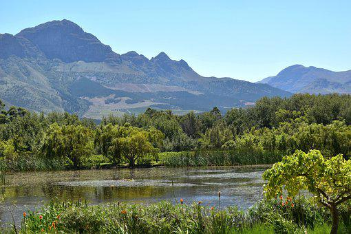 Wine Farm, Western Cape, Winelands, Tourism, Wine