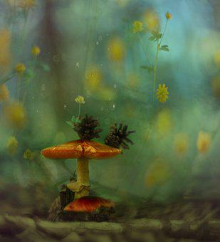 Spring, Summer, Sponge, Macro, Nature, Bokeh, Flowers
