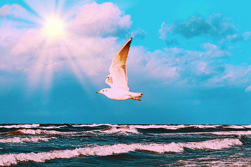 Seagull, Sea, Bird, Summer, Freedom, Sky, Sun, Flying