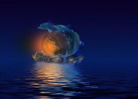Fish, Dolphin, Sea, Rock, Jump, Night, Sky, Moon, Seem