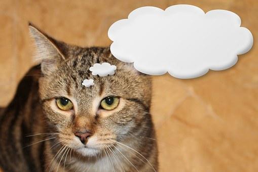 Cat, Domestic Cat, Animal, Pet, Animal World