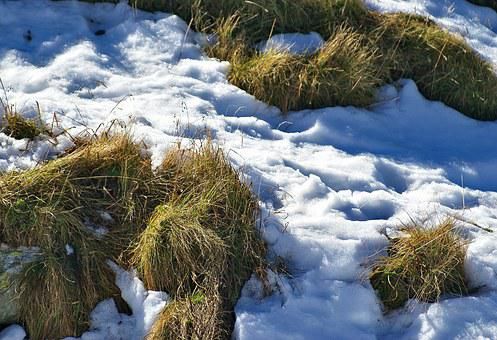 Grass, Parched Grass, Snow, First Snow, Autumn
