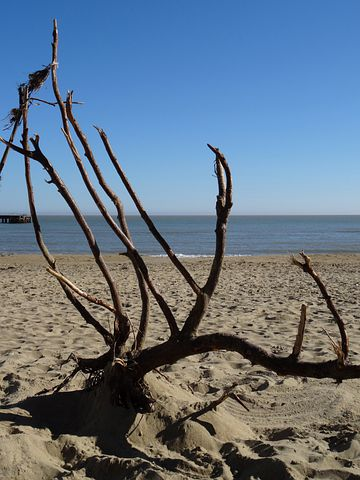 Isle Of Wight, Sandown Beach, Branches, Sea, Sky