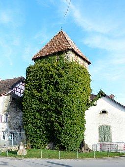Hexenturm, Tower, Fouling, Ivy, Ingrowing, Hithe