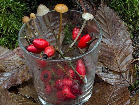 Glass, Fruits, Rose Hip, Hag Butte Fruits, Mushrooms