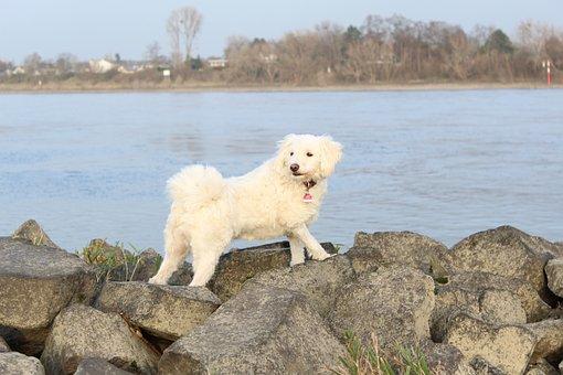 Rhine, Water, Dog, Stein Am Rhein, Bank, River, Groyne