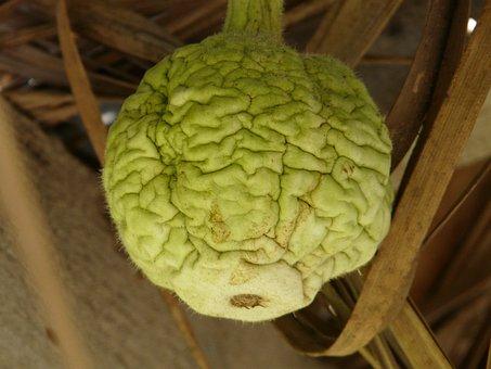 Bottle Gourd, Reverse Schrumpelt, Small
