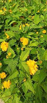 Yellow Flower, Plant, Spring