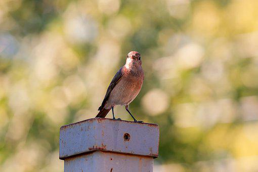 Bird, Animals, Birds, Nature, Pen, Plumage, Eyes, Wings