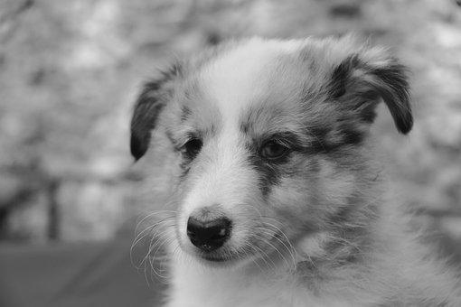 Dog, Pup, Puppy, Black And White Photo, Dog Portrait