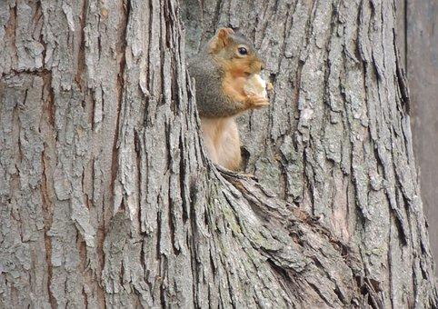 Squirrel, Small Mammal, Tree, Cute, Mammal, Nature