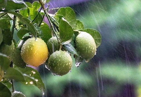 Rains, Raining, Water, Leaf, Green