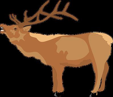Deer, Brown, Open, Mouth, Loud, Animal, Teeth, Antlers