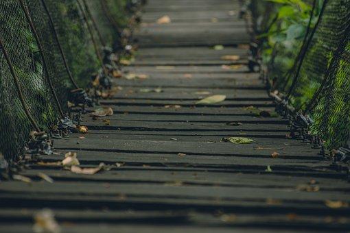 Bridge, Leaves, Autumn, Landscape, Trees, Amazon, Lake