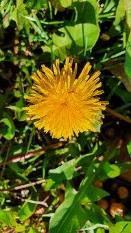 Flower, Sunflower, Garden, Bloom, Summer, Yellow
