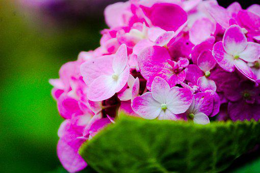 Flower, Green, Garden, Nature, Bloom, Plant, Colorful