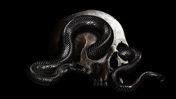 Snake, Head, Wild, Design, Dead