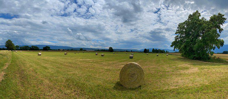 Field, Wheel, Hay, Roller, Harvest, Straw, Agriculture