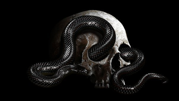 Snake, Head, Wild, Design, Dead, Adventure, Camping