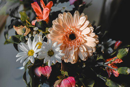 Flowers, Colorful, Plant, Indoors, Chamomile, Petals