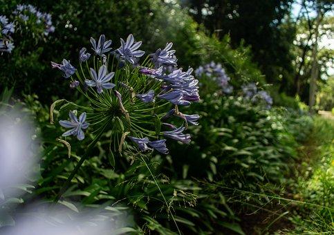 Flowers, Purple, Golden Hour, Bloom, Plant, Lavender