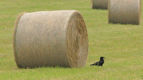 Field, Wheel, Hay, Roller, Harvest, Straw, Raven