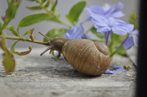 Snail, Clam, Shell, Slowly, Mucus, Creature, Snails