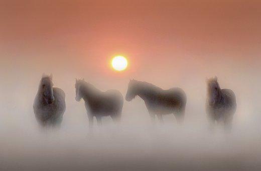 Equines, Horses, Horse, Animal, Nature