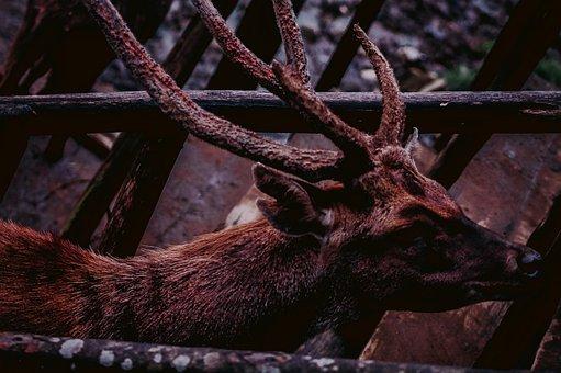 Deer, Animal, Animals, Horn, Background, Forest