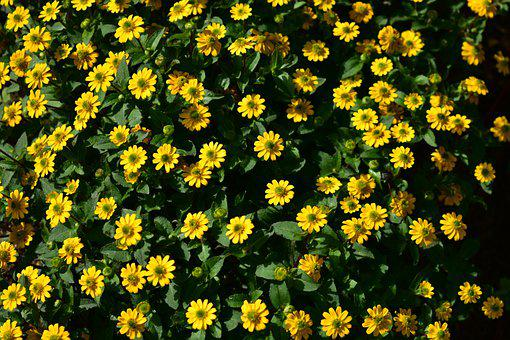 Garden, Sunflower, Summer, Nature, Blossom, Yellow