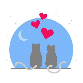 Cat, Boyfriends, Love, Heart, Beautiful, Romantic