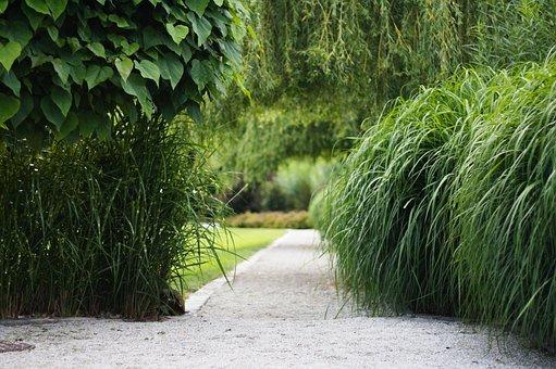 Park, Garden, Grass, Summer, Peace Of Mind, Nature