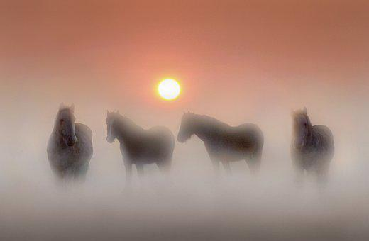 Equines, Horses, Horse, Animal, Nature, Field, Pony