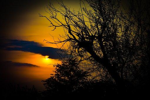 Sunset, Tree, Nature, Landscape, Forest, Evening, Sun