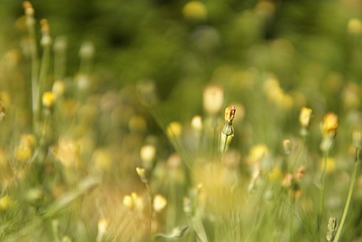 Meadow, Wild Meadow, Sunlight, Wild Flowers, Macro