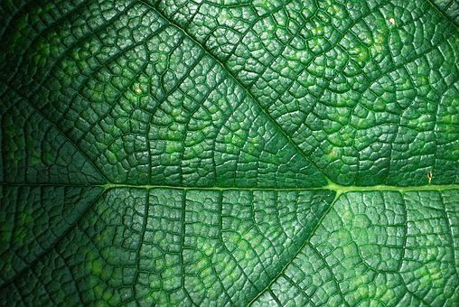 Background, Nature, Green, Texture, Plant, Macro