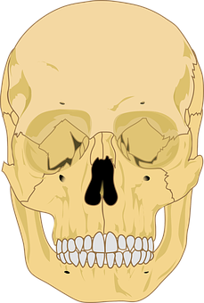 Skull, Human, Death, Bone, Jaw, Cranium, Orange Death