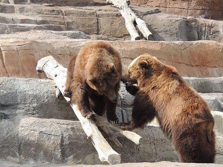 Alaskan Brown Bear, Brown Bear, Bear, Zoo, Animal