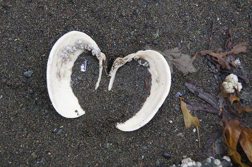 Shell, Heart, Sand, Sea, Love, Nature, Beach, Summer