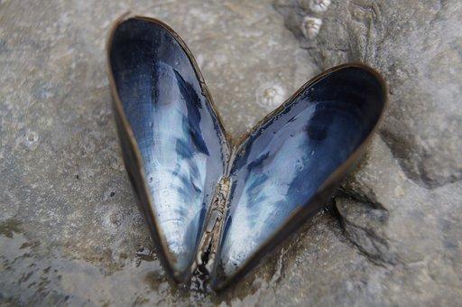 Shell, Heart, Beach, Blue, Natural, Sea, Sand, Nature