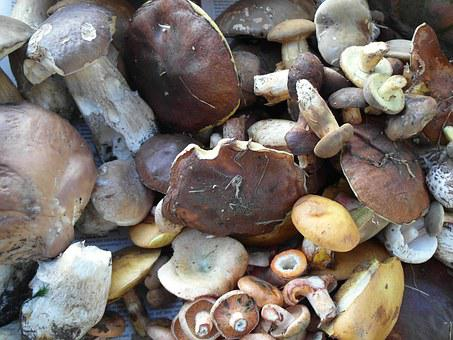 Porcini, Boletus Edulis, Boletus, Mushroom