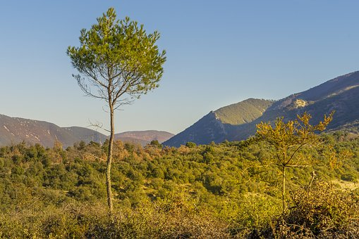 Aleppo Pine, Landscape, Fall, Mountains, Lights, Color