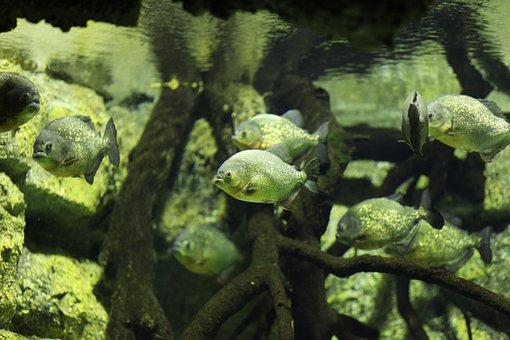 Fish, Animal World, Fauna, Exotic Animal, Animals