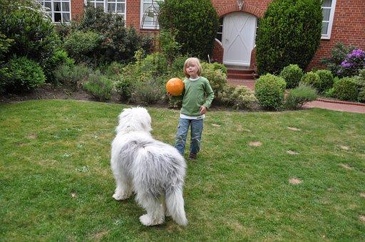 Boy, Dog, Ball, Cute, Bobtail, Child, Young, Fellig