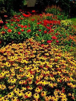 Flowers, Cornell, Garden