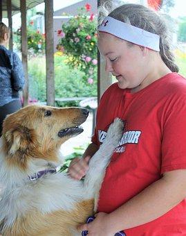 Dog, Collie, Lassie, Pet, Canine, Cute, Animal, Happy